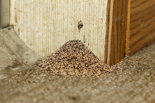 Slo Pest And Termite Local Treatment Our Clients Have 2